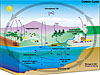 Diagram shows cycle of carbon traveling from plants to atmosphere to the oceans and ocean sediments