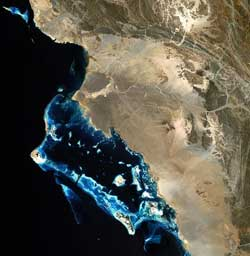 Image of coral reefs in the Red Sea