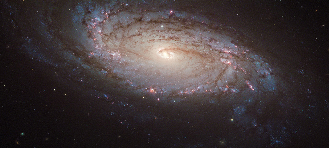 luminous spiral galaxy with pink star-forming clusters, dark dusty strands and one pale yellow supernova