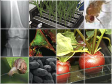 Collage of images showing bugs, cells, plants and X-rays of human bones