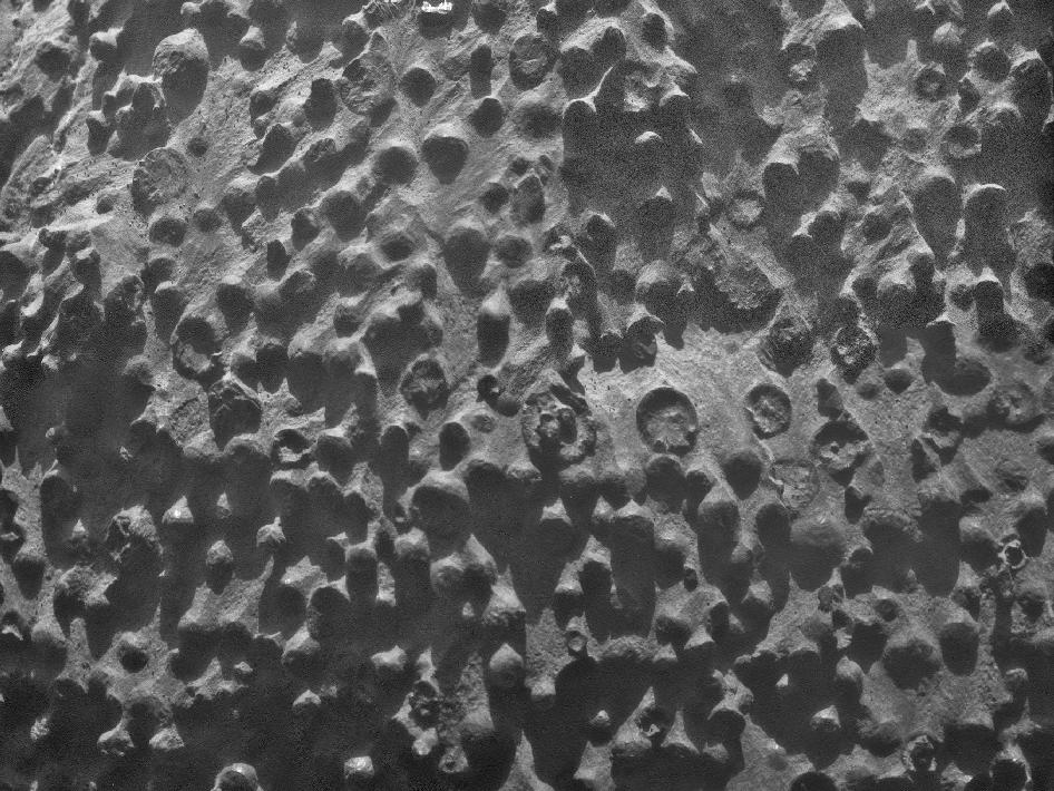 Small spherical objects fill the field in this mosaic combining four images from the Microscopic Imager