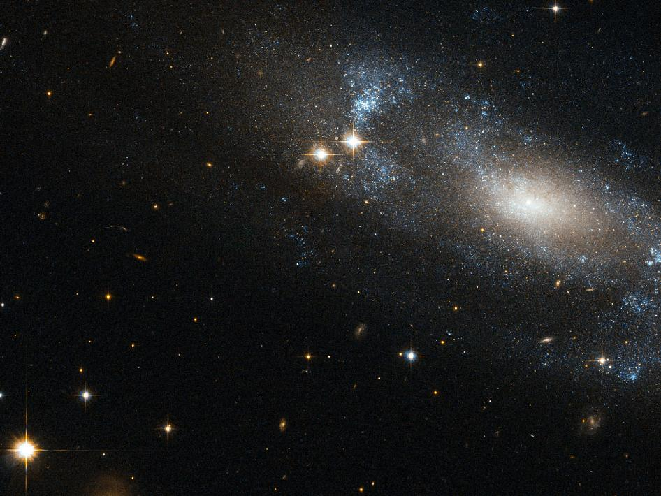 The NASA/ESA Hubble Space Telescope has spotted the spiral galaxy ESO 499-G37, seen here against a backdrop of distant galaxies, scattered with nearby stars.