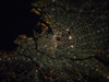 iss033e021464 -- City lights of Tokyo