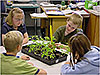 Four students sit at a table as one measures a tomato plant