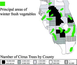 The number of citrus trees by county, and key areas of winter vegetable cultivation during 2000.