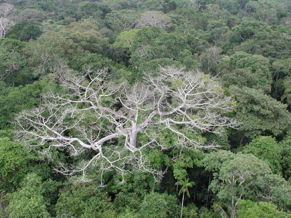environment of the amazon rainforest 7 steps you can take to help save the amazon and the world's rainforests, from   you can help alleviate oil's impact on the environment by reducing your own oil.