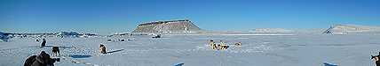 Panorama: Sled dogs on sea ice in North Star Bay near Thule Air Base, Greenland, with 700-foot-high Mount Dundas in the background.