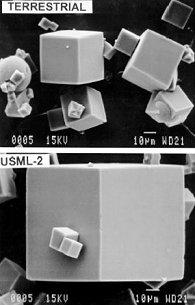 Zeolite crystals grown on Earth and zeolite crystals grown onboard the shuttle Columbia in 1995