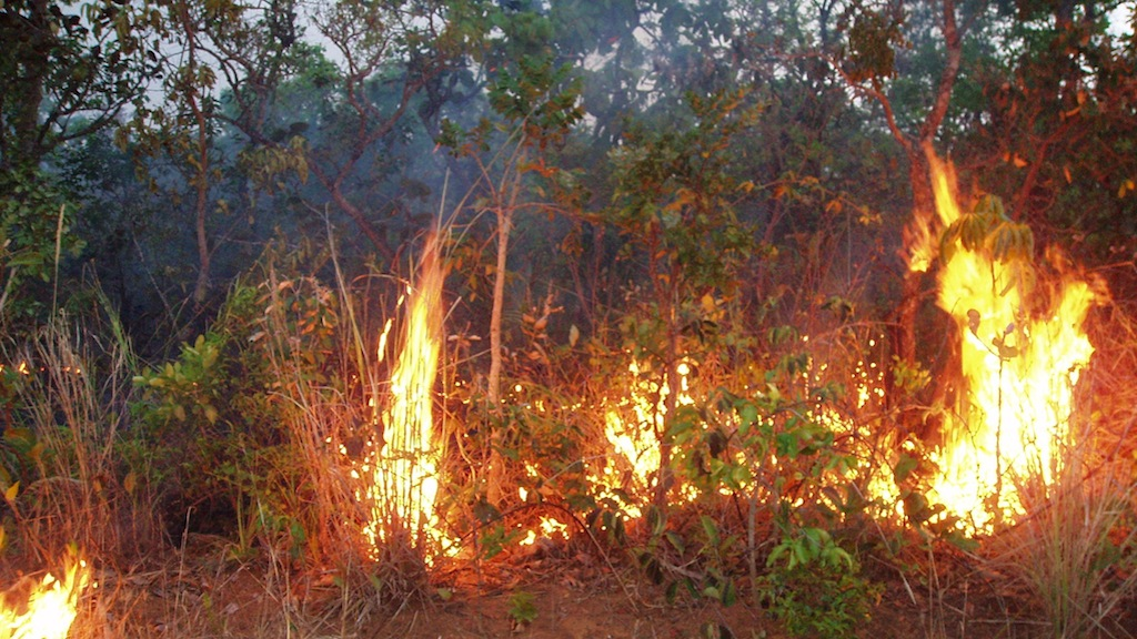Amazon Forest Fire Risk To Increase In 2013 Nasa