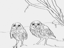 Two Owls Stand Under A Bush In The Desert
