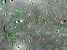 A portion of Mercury surface, seen by MESSENGER and used for crater-counting