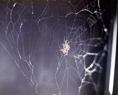 A spider spins its web as part of an experiment on Skylab.