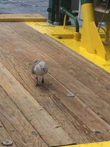 A seagull stops aboard for some crackers and water before continuing his journey.