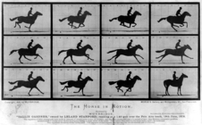 19th-century print of horse galloping, showing 12 different points in its stride