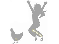 A Silhouette of a young girl and a chicken, each with a leg bone highlighted