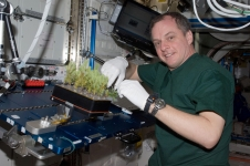 NASA astronaut T.J. Creamer services the Advanced Plant Experiments-CSA2 study. It is expected that tree growth in microgravity will affect their growth rate, composition, tissue organization and gene expression.