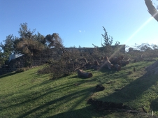 Fallen trees in Bermuda from Gonzalo