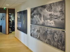display of photographs by Bert Pasquale