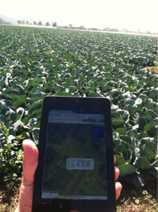 Smartphone in a crop field