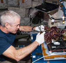 "The International Space Station's Vegetable Production System (""Veggie"")"