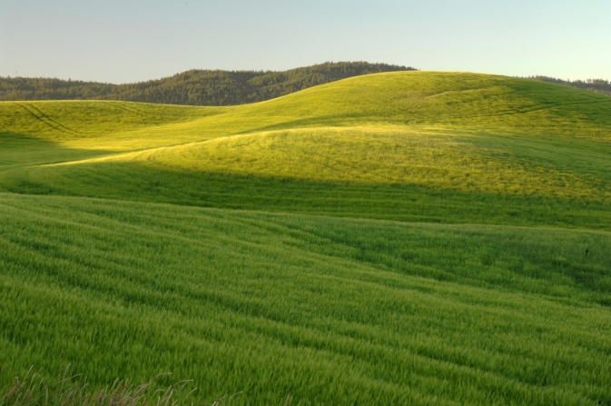 A field near Moscow, Idaho.