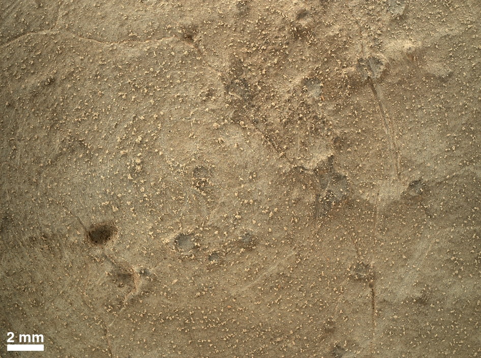 Close-up of Brushed Area on Martian Rock Target 'Ekwir_1'