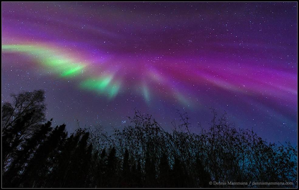 Alaska Corona