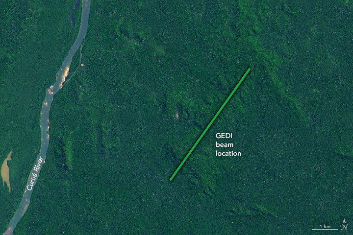GEDI's three lasers cover a path roughly 2.5 miles wide, capturing canopy height and forest structure across the swath. This tra