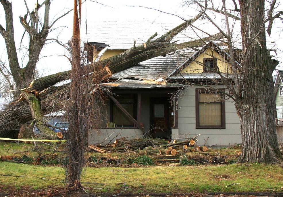 Wind damage in Washington state