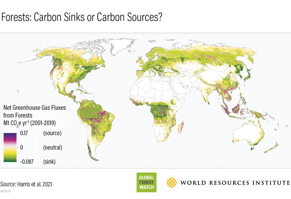 Mapa mundial que muestra las regiones boscosas que son fuentes de emisiones de carbono (violeta) y dónde se encuentran los sumideros de carbono (verde).