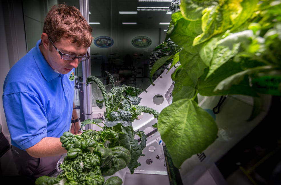 NASA's Matt Romeyn works in the Veggie Lab of the Space Station Processing Facility at the agency's Kennedy Space Center.