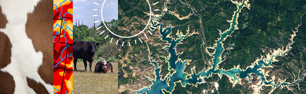 A banner image showing cows, cow print, drought maps, and satellite images of a reservoir during drought.