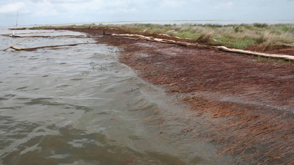 2010 photo of a shoreline in Bay Jimmy, Plaquemines Parish, Louisiana