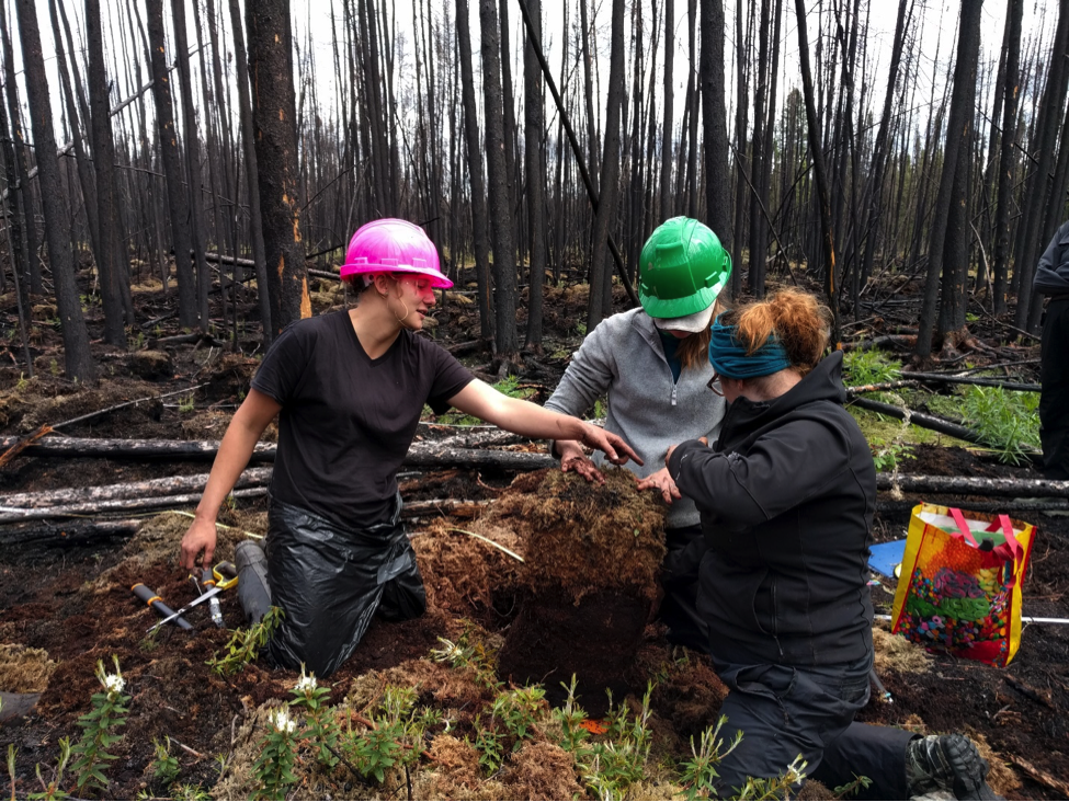 scientists in hardhats examine forest soil
