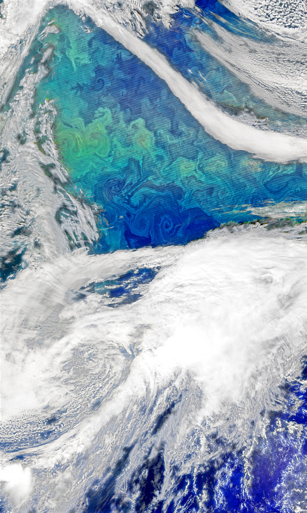 Bloom of phytoplankton in Atlantic imaged by satellite with clouds below and surrounding