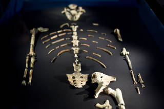 the Lucy fossil