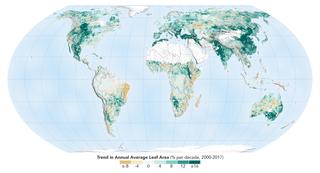 Un mapa mundial que muestra la tendencia en el área foliar promedio anual, en porcentaje por década (2000-2017)