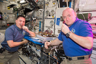 NASA astronauts Kjell Lindgren, left, and Scott Kelly harvest the first red lettuce grown on the International Space Station.
