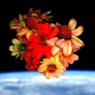 Scott Kelly photographed a bouquet of zinnias in the space station cupola against the backdrop of Earth