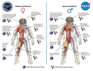 Image showing illustration key differences in how men and women adapt differently to human spaceflight