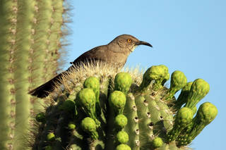bird on a cactus