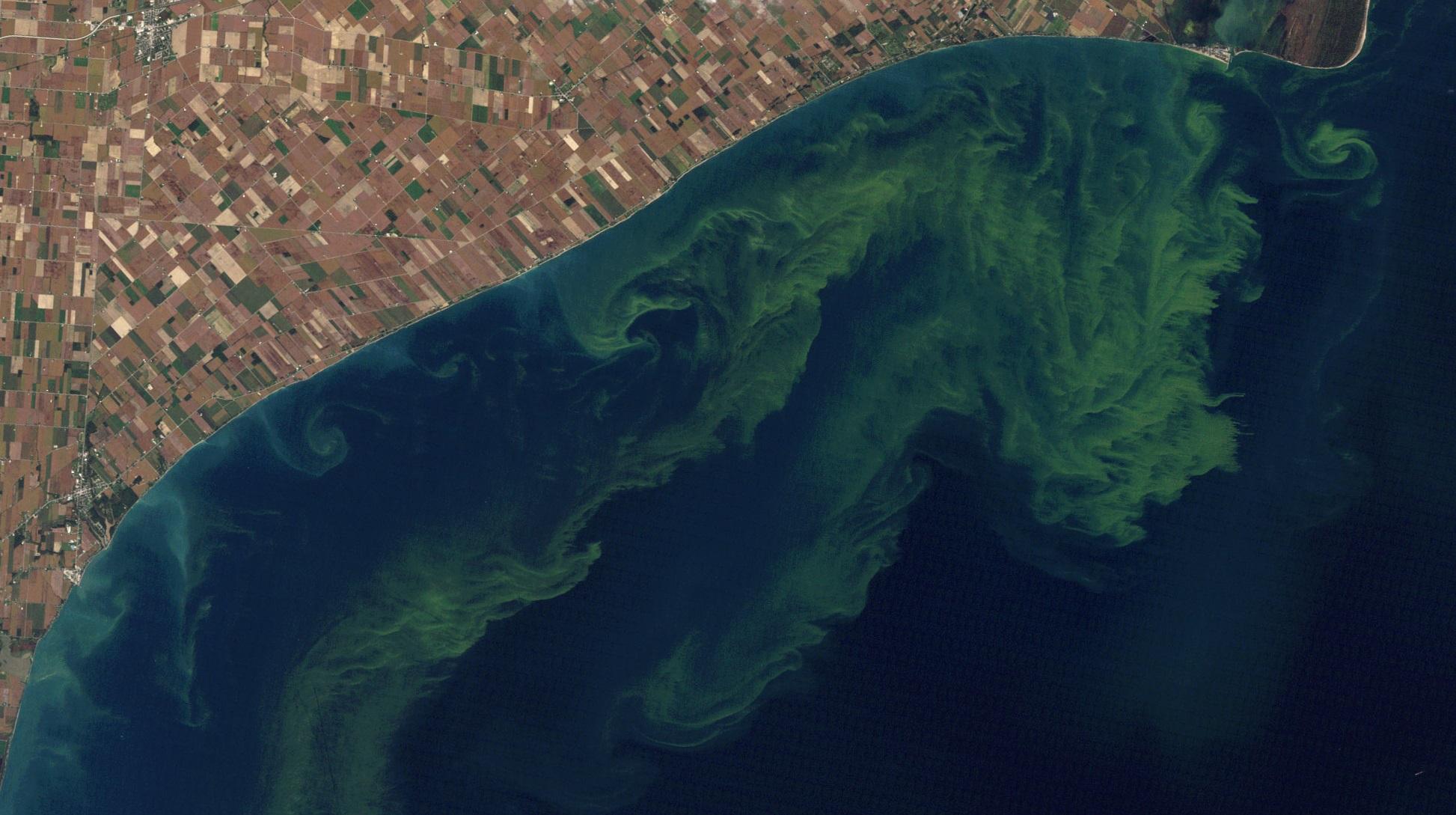 Lake Erie Algal Blooms