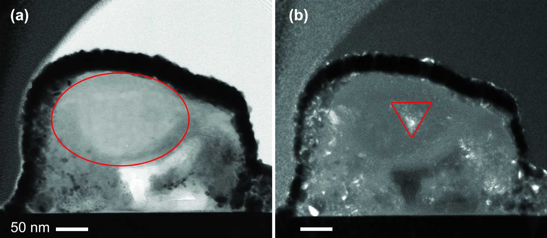 These transmission electron microscope (TEM) images reveal that one interstellar grain consists of a small crystalline enstatite core within a non-crystalline (amorphous) silicate of similar elemental composition. The 'bright field' TEM image on the left shows density contrast, where the thick dark rind surrounding the interstellar grain (circled in red) is a protective platinum strap used for sample preparation. In the 'dark field' TEM image on the right, crystalline materials appear bright and amorphous materials are dark. The scale bar is 50 nanometers in length, 50 billionths of a meter.