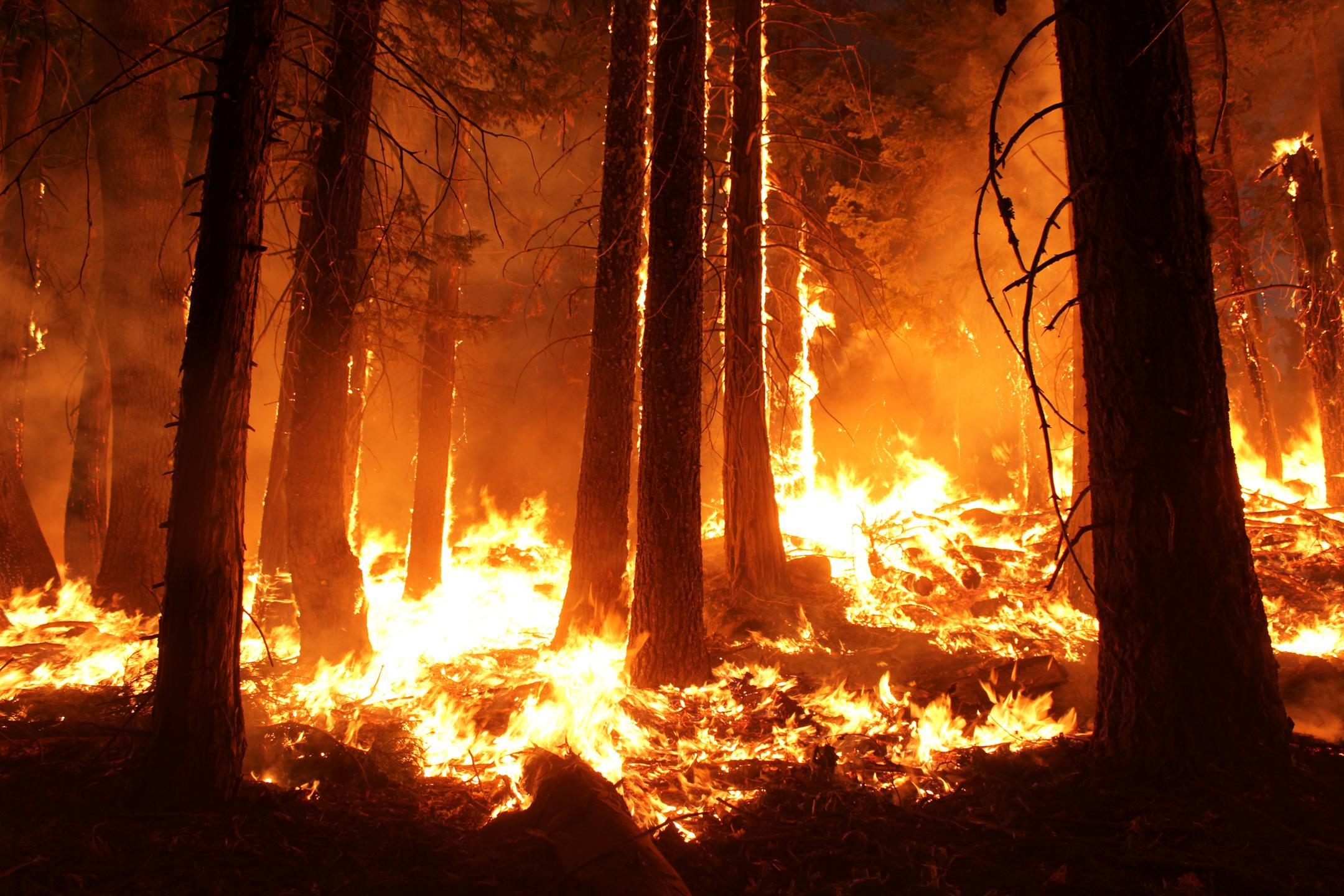 nasa forest fire ile ilgili görsel sonucu