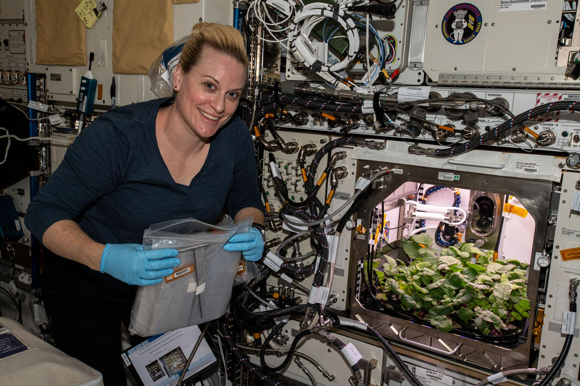 First radishes grown in space