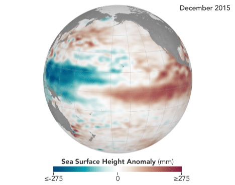 An El Niño occurs when the eastern Pacific ocean warms. When it warms, the ocean water expands, causing sea level to rise, as seen here in the Jason-2 data of sea surface height shown in red.