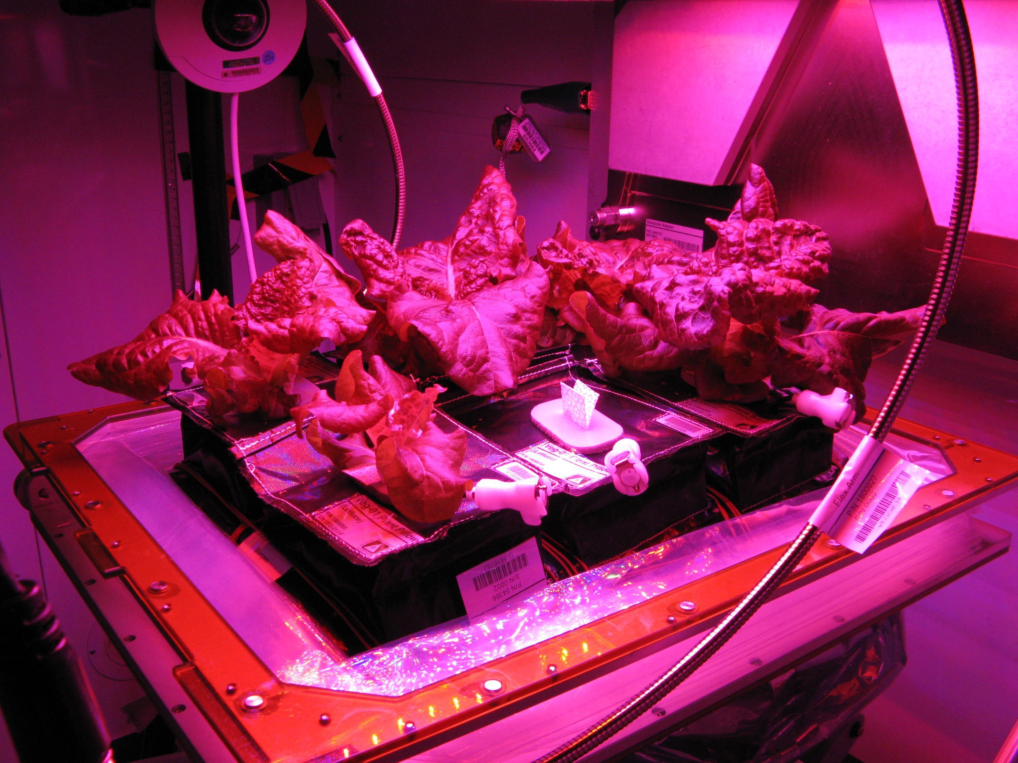 space farming yields a crop of benefits for earth nasa growing plants