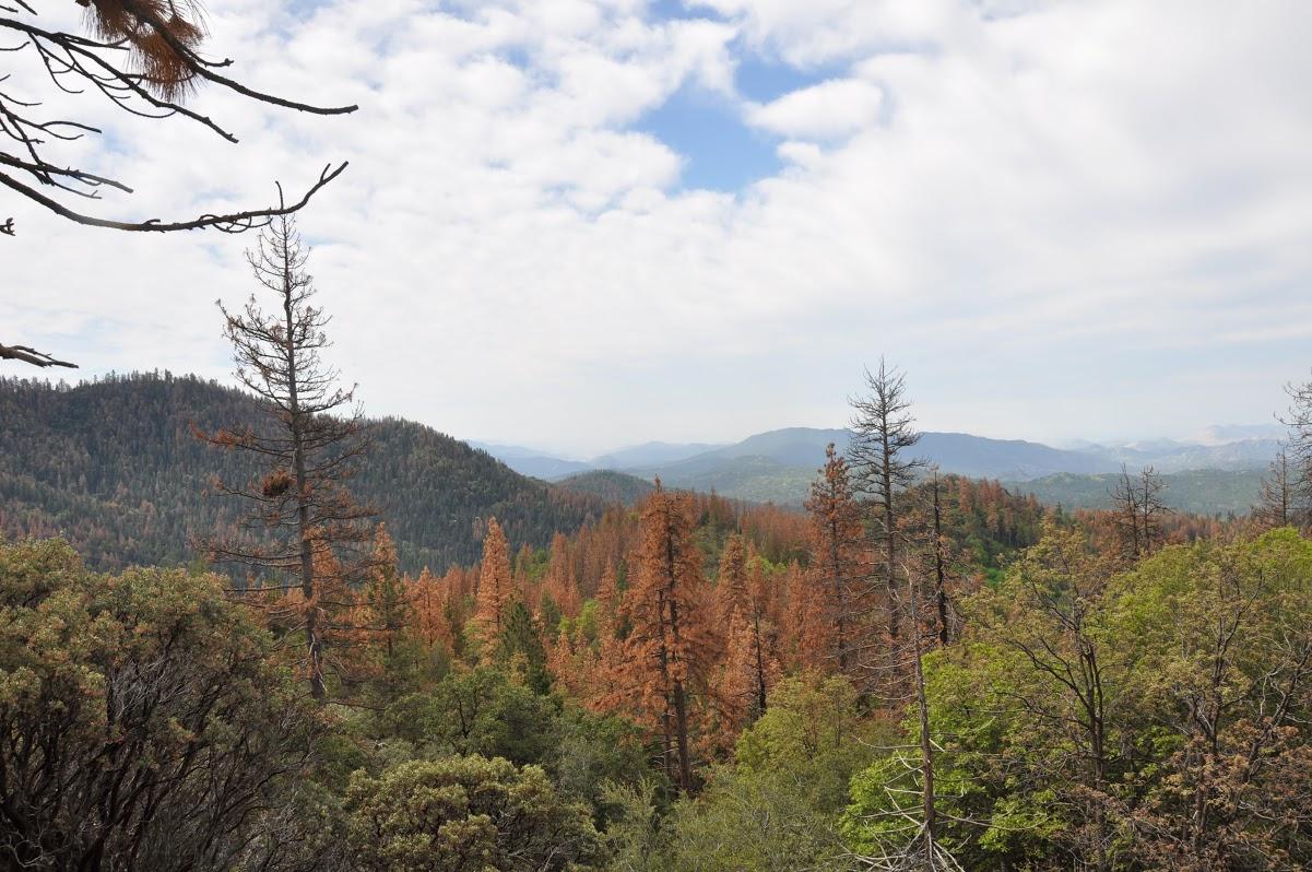 NASA Maps California Drought Effects On Sierra Trees NASA - Nasa us drought maps