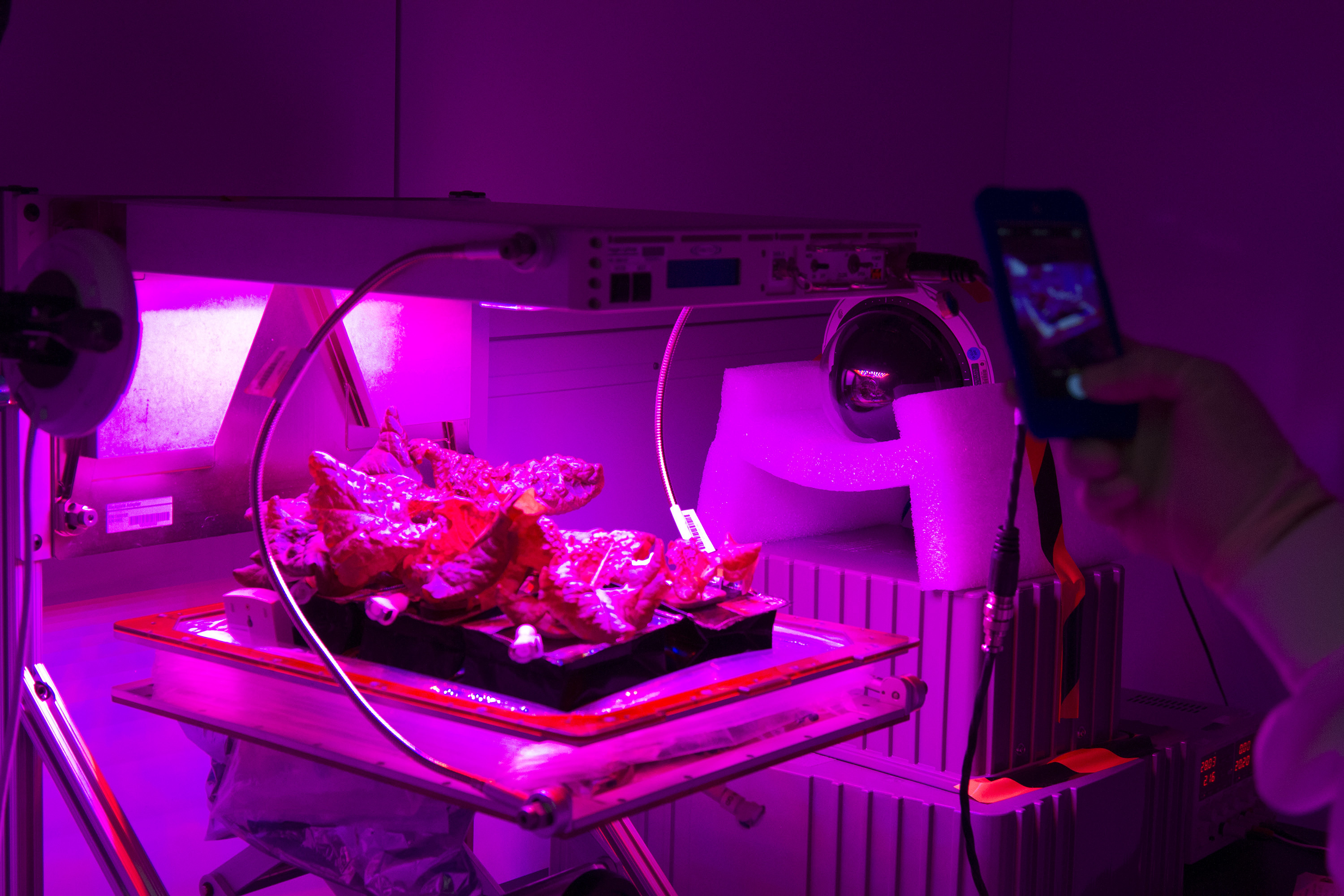 Researchers Mirror Space Station S Veg 01 Harvest In